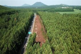 '찢겨진' 제주 삼나무숲